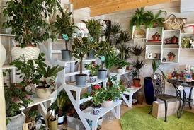 Vente de plantes d'intérieur