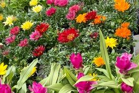 Venez acheter nos plants de légumes, de fleurs et nos plantes à Saint-Aubin-de-Médoc