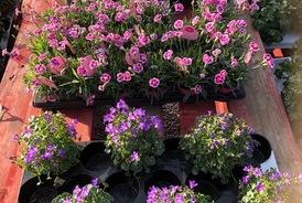 Vente de plantes extérieures