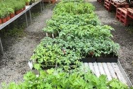 Vente de plants de fleurs, fruits et légumes