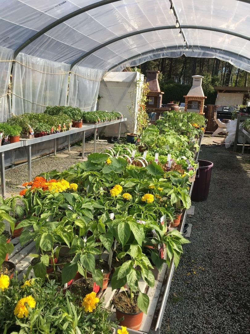 Les plants de légumes et fleurs sont arrivés chez Picot Déco Jardin