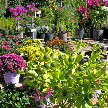 Vente de plantes d'ornement en Gironde près de Bordeaux