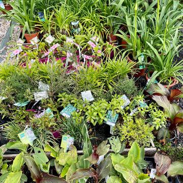 Ventes de plantes à Saint-Aubin de Médoc