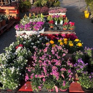 Vente de fleurs pour aménagement de jardin proche de Bordeaux