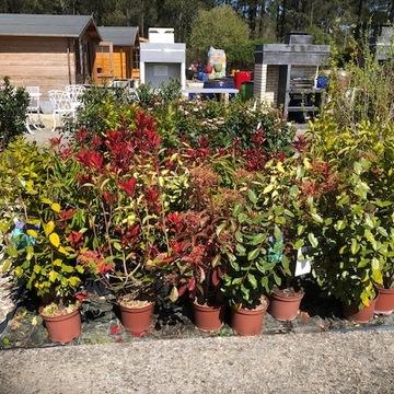 Vente de plantes d'ornements près de Bordeaux