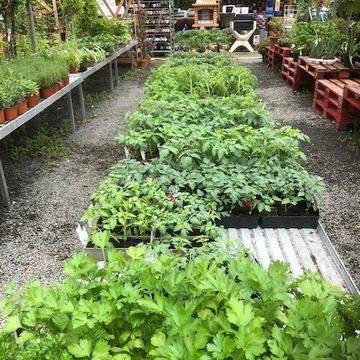 Vente de plants de légumes à Saint-Aubin de Médoc