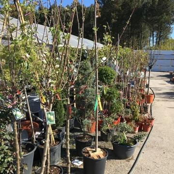 Vente de plants de légumes et de fleurs à Saint-Aubin-de-Médoc